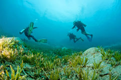 Scuba divers. Divers swim over sea grass in ocean stock photography