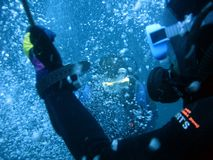 Scuba divers. On safty stop Stock Images