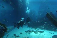 Scuba divers in an aquarium Stock Photos