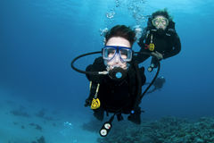 Scuba divers and coral. In the blue ocean royalty free stock photos