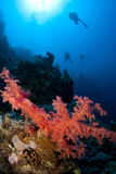 Scuba divers and coral Stock Image