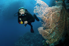Scuba divers and coral Stock Photography