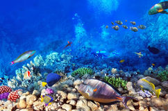Scuba divers, coral and fish