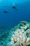 Scuba divers on coral reef Royalty Free Stock Photo