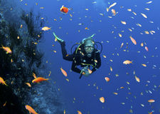 Scuba divers on coral reef Stock Image
