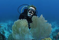 Scuba divers on coral reef. Male scuba diver swims on coral reef Stock Photography