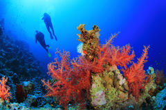 Scuba Divers on Coral Reef. Two scuba divers swim over beautiful red soft corals royalty free stock photography