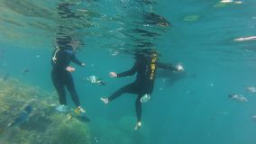 Scuba divers and coral reef with fishes. A birds eye view shot of coral reefs underwater. Camera tilts up to show scuba divers stock footage