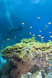 Scuba divers in crystal clear water Royalty Free Stock Images