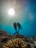 Scuba divers dancing underwater in the Red Sea Royalty Free Stock Photos