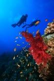 Scuba Divers explore coral reef Stock Images