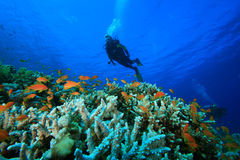 Scuba Divers explore coral reef Stock Photos