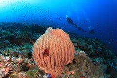 Scuba Divers explore coral reef Stock Photo