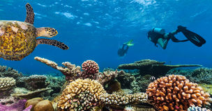 Scuba divers explore a coral reef. Scuba divers with turtle explore beautiful coral reef. Underwater photography in Indian ocean, Maldives Stock Photos
