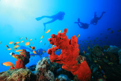 Scuba Divers explore reef Stock Image