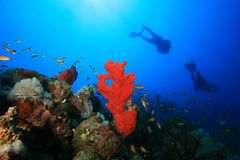 Scuba Divers explore reef Stock Photos