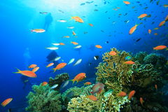 Scuba Divers explores coral reef Royalty Free Stock Images