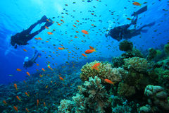 Scuba Divers explores coral reef Stock Images