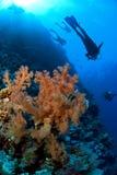 Scuba divers exploring. Scuba diving group exploring the reef Stock Images