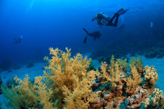 Scuba divers exploring. Scuba diving group exploring the reef Royalty Free Stock Photo