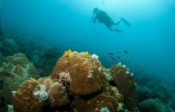 Scuba divers exsplore coral reef in the red sea Stock Image