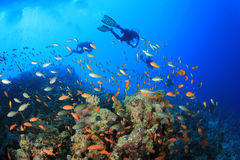 Scuba Divers and Fish Royalty Free Stock Photography