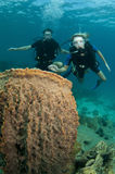 Scuba divers look at coral reef Royalty Free Stock Photos