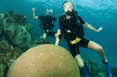 Scuba divers look at coral reef Stock Photo