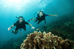 Scuba divers look at coral reef Royalty Free Stock Photography
