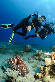 Scuba divers look at octopus