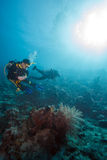 Scuba Divers near Sea Bottom Royalty Free Stock Image