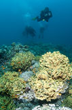 Scuba divers over coral reef Stock Photo
