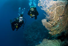 Scuba divers in red sea Royalty Free Stock Photos