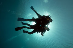Scuba divers in the Red Sea. Stock Photography