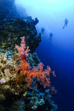 Scuba divers and red sea coral Royalty Free Stock Photography