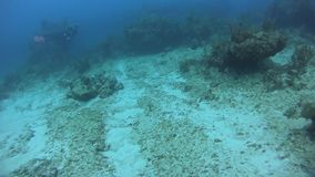Scuba divers swimming along coral reef. stock footage