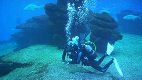 Scuba divers under water. Aquarium with plants and tropical colorful fishes stock video