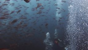 Scuba divers underwater on background of school fish in Galapagos. Unique beautiful video. Abyssal relax diving in world of wildlife. Natural aquarium of sea stock video footage