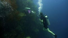 Scuba Divers underwater. Scuba divers explores underwater coral reef and watching fish.Scuba diver underwater in tropical sea.Tropical fish on coral reef royalty free stock photography