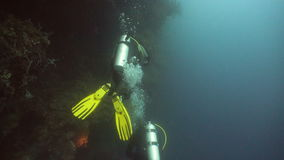 Scuba divers underwater stock video