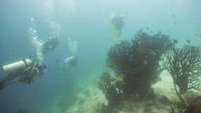 Scuba divers underwater. Scuba divers explores underwater coral reef and watching the fish.Scuba diver underwater in a tropical sea.Tropical fish on a coral reef stock footage