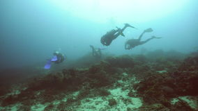 Scuba divers underwater. stock footage