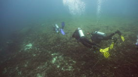 Scuba divers underwater. stock video footage