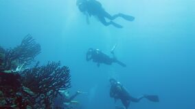 Scuba divers underwater. Leyte, Philippines.