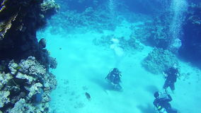 Scuba divers underwater. Red Sea, Egypt. stock video footage