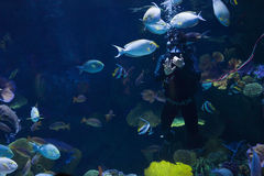 Scuba divers in water Royalty Free Stock Photography