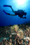 Scuba-Diving. A scuba diver is exploring an underwater reef landscape in deep blue water stock images