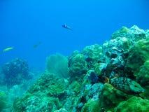 Scuba Diving Stock Photos