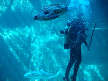 Free Scuba Diving Stock Photos - 545603