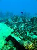 Scuba diving Royalty Free Stock Photos